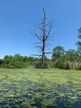 tree in the swamp water