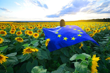 European Union flag in female hands against the sunflowers field