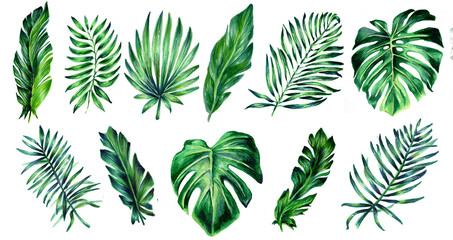 Set of tropical leaves. Botanical watercolor illustrations. Collection of monstera leaves, banana,  palms isolated on a white background. Beautiful illustration for textiles, packaging