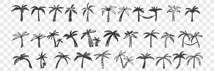 Hand drawn palm trees doodle set.