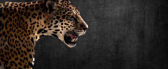 Wall Mural - jaguar on horizontal grey wall background