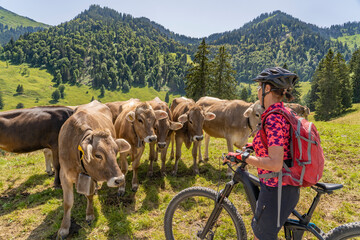 nice woman with mountain bike meets a group of funny, curious calfs on a mountain pasture in the Allgau Alps near Oberstaufen, Bavaria, Germany Wall mural
