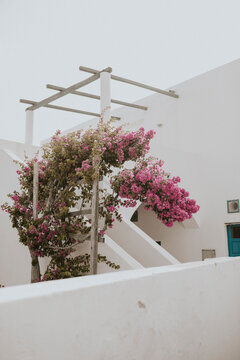 pink flowers on the wall