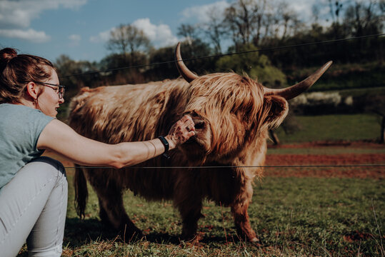 Woman Playing With Highland Cattle