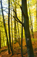 Hiking trail sign on a tree in a forest in autumn