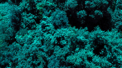 Detail of underwater useful for textures and patterns.