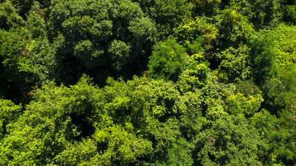 Aerial view of a dense forest. There are many trees, bushes and green grass on this beautiful spring day.