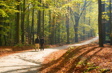 Unidentified people walking a road in a forest with beautiful autumn colors
