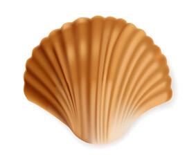Realistic seashell isolated, sea element, vector illustration