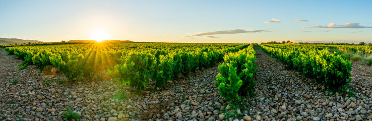 Panoramic view of a vineyard in Spain during a summer day sunrise Fototapete