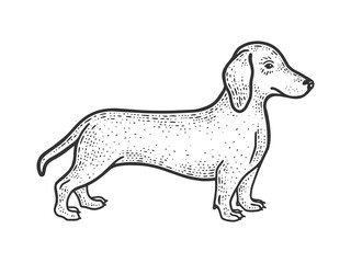 Dachshund sausage dog sketch engraving vector illustration. T-shirt apparel print design. Scratch board imitation. Black and white hand drawn image.