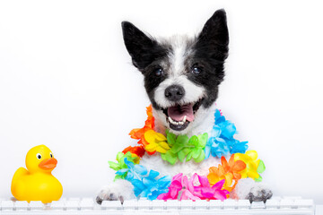 Photo sur Plexiglas Chien de Crazy dog booking online