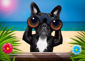 Photo sur Plexiglas Chien de Crazy watching dog with binoculars