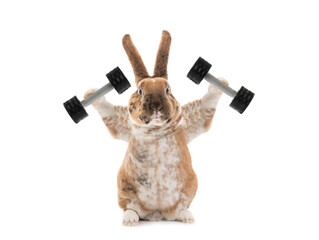 Bunny with dumbbells isolated on a white background.