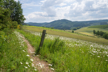 Wall Mural - Panoramic image of the Sauerland region close to Winterberg with a small hiking trail through a wild flower meadow, Germany