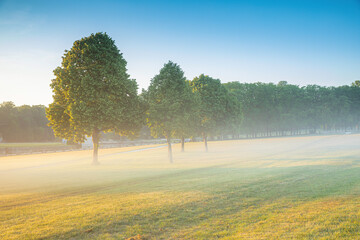 Photo sur Plexiglas Olive Petit matin sur les pelouses de Chantilly
