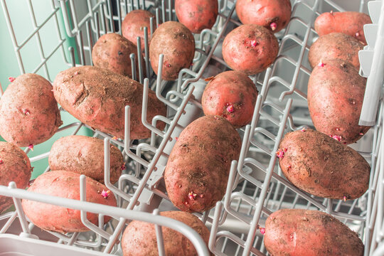Dirty potatoes lie in the dishwasher