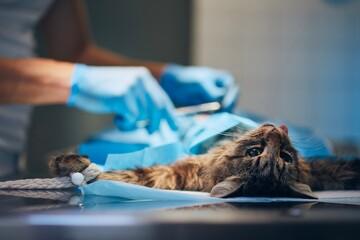 Cat in animal clinic