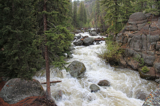 Rushing creek in a heavily treed (evergreens) and mountainous setting