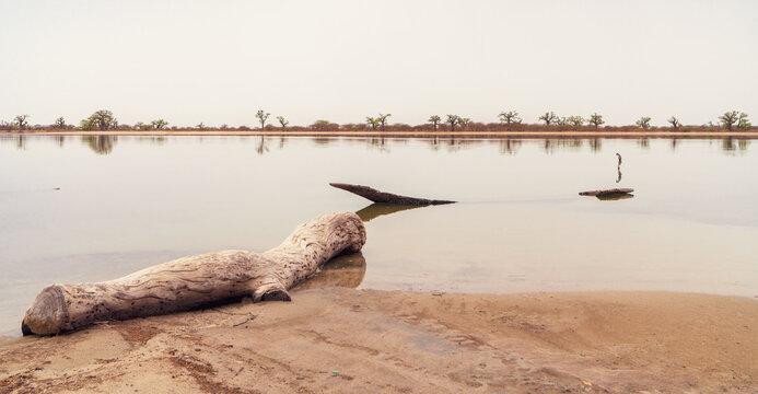 Peaceful african landscape near Sine Saloum, Senegal, Africa.