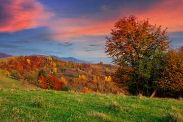 autumnal rural landscape at dusk. beautiful countryside in mountains. trees in fall foliage on green rolling hills. dramatic clouds above the distant ridge