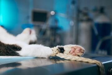 Cat in animal hospital