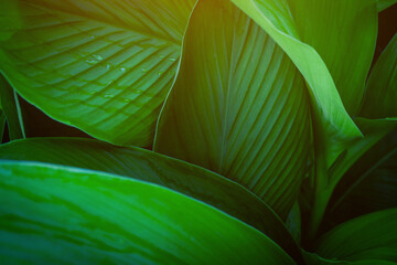 Wall Mural - closeup nature view of green leaf on background and sunlight, fresh wallpaper banner concept