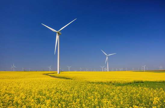 Wind farm and beautiful rapeseed flower in bloom with a clear blue sky. Lots of wind turbines in a field of blooming rapeseed. Windmill in Dogrogea, Romania