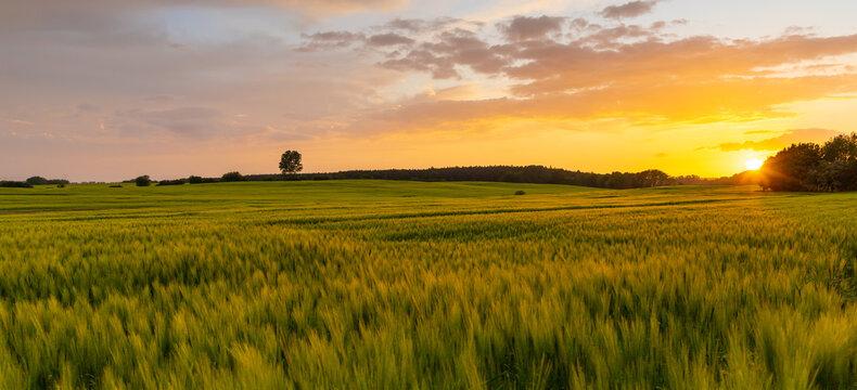 Sonnenuntergang über einem Feld