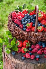 Various berry fruits in wicker basket in sunny garden