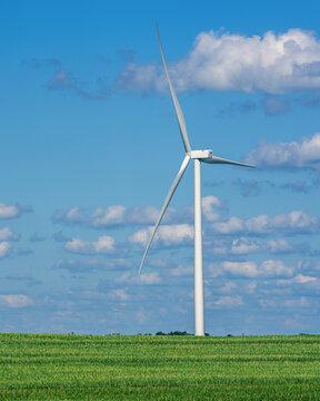 Wind turbine in a corn field