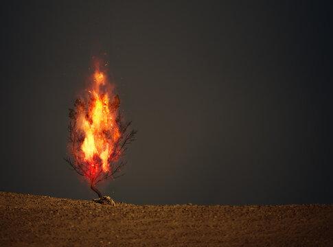 burning thorn bush christian symbol