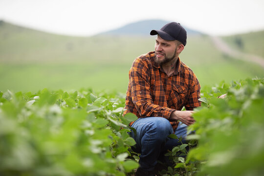 Farmer agronomist on a growing green soybean field. Agricultural industry