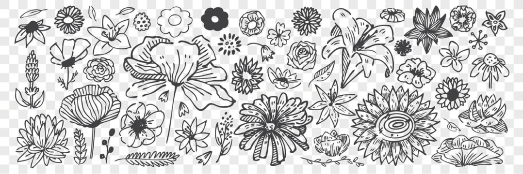 Hand drawn flowers doodle set.