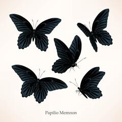 Vector set of black butterflies in five views