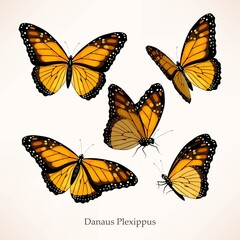 Monarch vector art in several different views