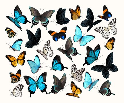 Big vector set of high detailed butterflies
