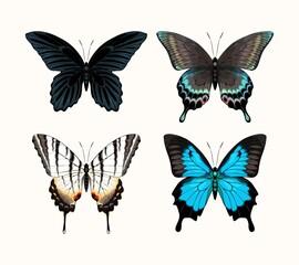 Vector set of high detailed tropic butterflies