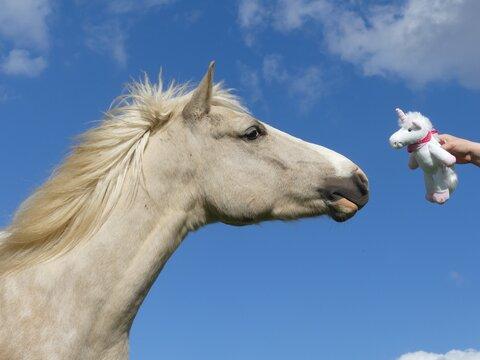 Quand une licorne rencontre une autre licorne