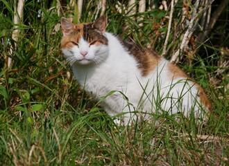 Mürrische Katze im Gras