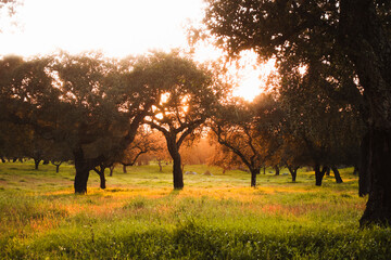 Trees on grassy field during sunset at Evora, Portugal