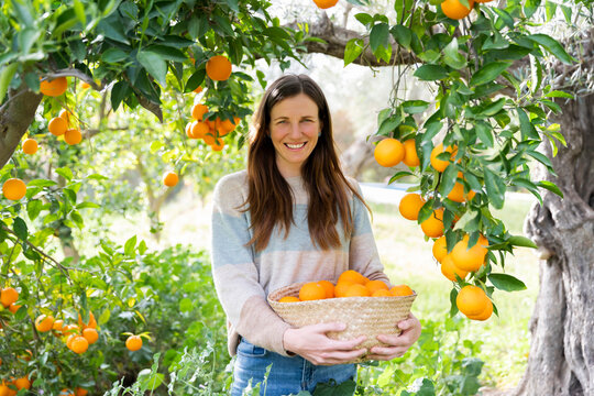 Smiling mid adult woman carrying oranges in wicker basket at organic farm