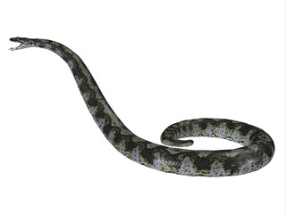 Titanoboa Snake Side Profile - This predatory carnivorous Titanoboa snake lived during the Paleocene Period of Columbia, South America.