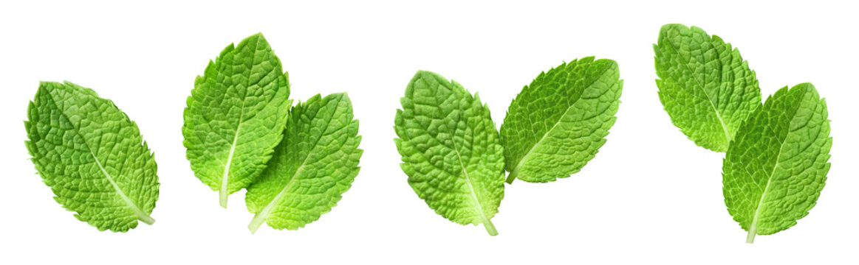 Fresh mint leaves set, isolated on white background