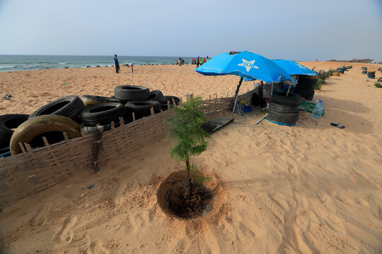 A tree that was newly planted by Guediawaye je m'engage association to reforest the coastline  is pictured on the coast of Guediawaye, Dakar