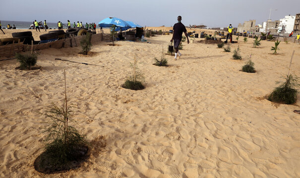A man from Guediawaye je m'engage association  walks to water newly planted trees to reforest the coastline on the coast of Guediawaye, Dakar