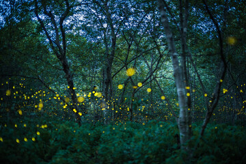 Firefly flying at night in the forest