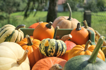 Various pumpkins and squashes harvest stack.