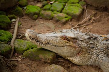Fotobehang Krokodil crocodile in the zoo