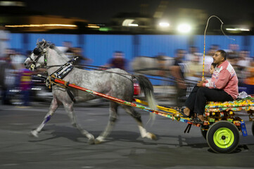 An Egyptian merchant is seen in action during a horse cart race showing off his horses's strengths, following the outbreak of the coronavirus disease (COVID-19), in Cairo